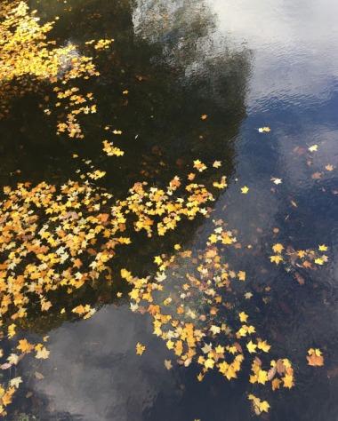 leavesonwater