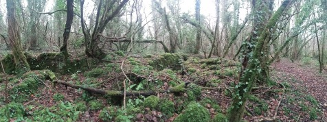I adore ruin-eating moss plantations..