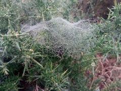 Bejewelled spider webs